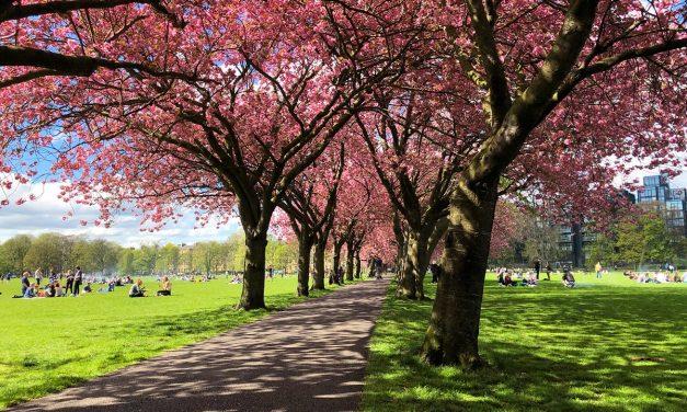 Les meilleurs endroits pour admirer les Cherry Blossom à Edimbourg